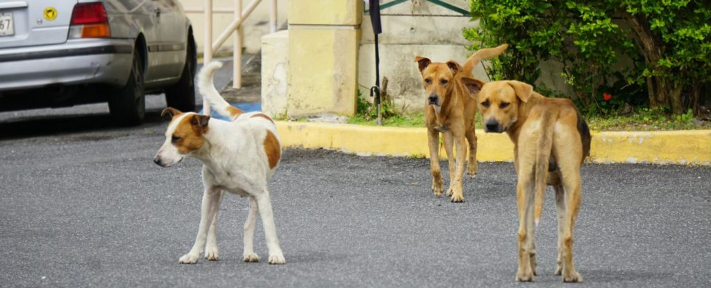 satos in parking lot abandoned dogs puerto rico