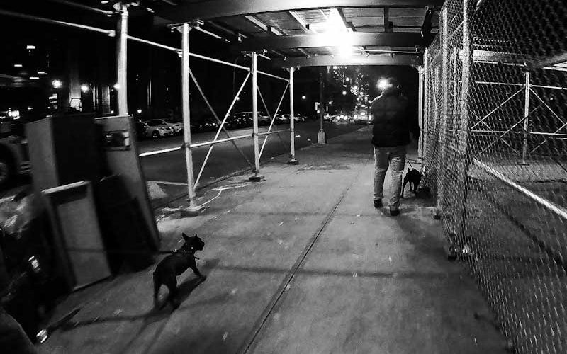 season 2 a life of dogs
