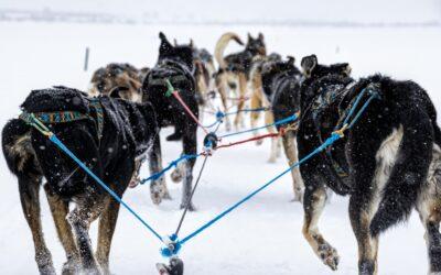 Iditarod Podcast
