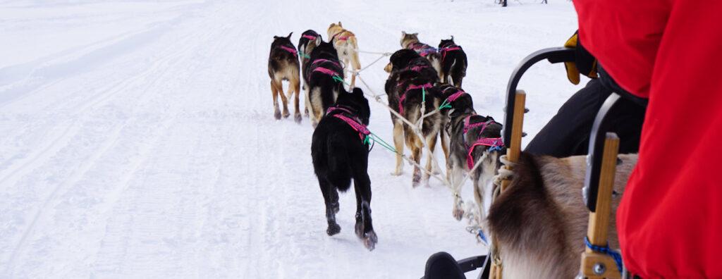 iditarod sled dog team